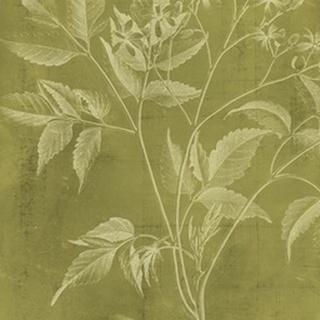 Modern Botany V