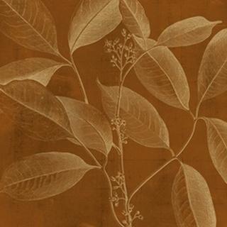 Modern Botany VI