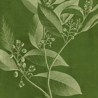 Modern Botany IV