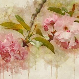 Blossom Elegance II