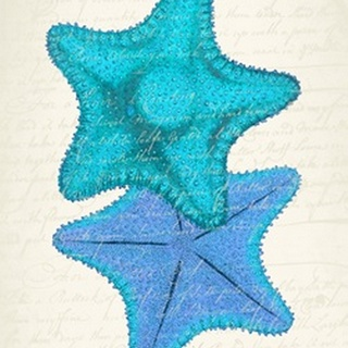 Starfish in Shades of Blue b