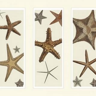 Starfish Print on 3 Panels