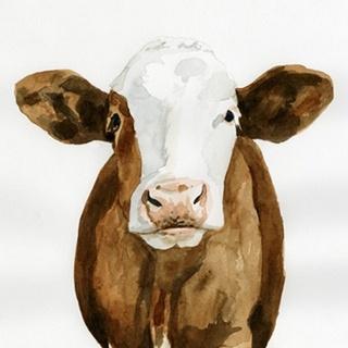 Cow Gaze II