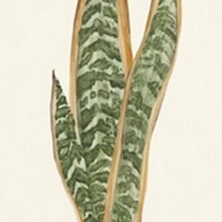 Snake Plants I