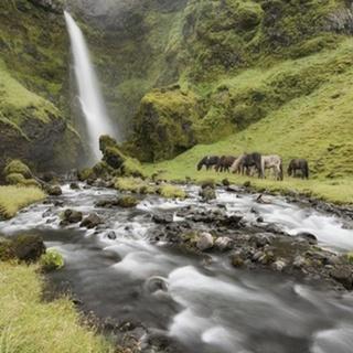 Waterfall Horses I