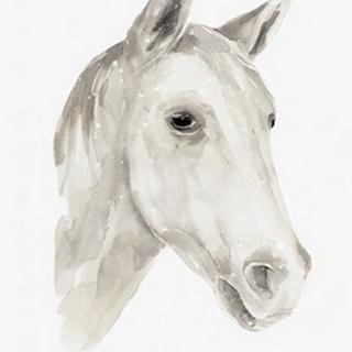 Ivory Stallion I