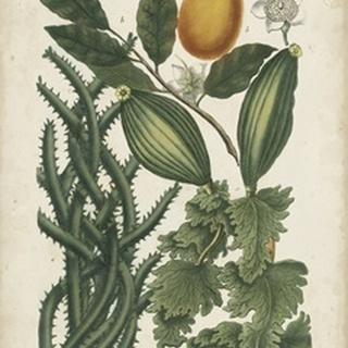 Exotic Weinmann Botanical III