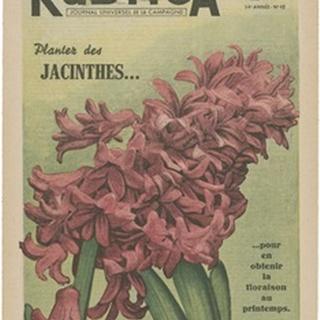 Plantez Des Jacinthes