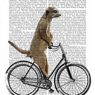Meerkat on Bicycle