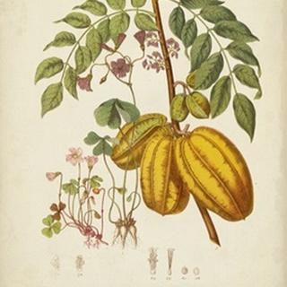 Twining Botanicals V