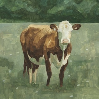Hereford Cattle I