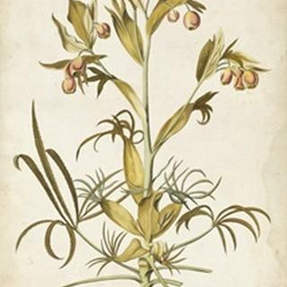 Elegant Botanical II