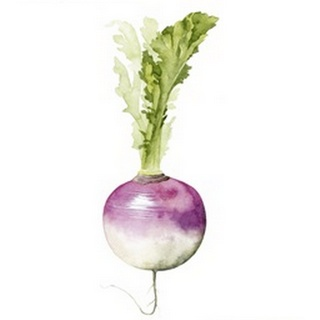 Root Vegetable VI