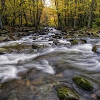 Roaring Waters II