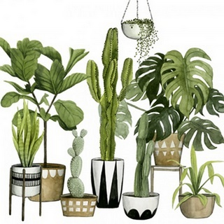 Plant Haven I