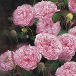 Rose Garden I