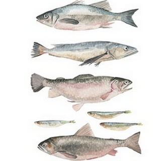 Fish Composition I