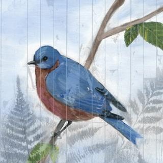 Eastern Songbird IV