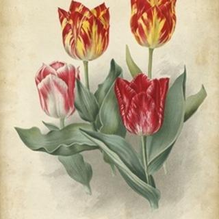 Tulip Florilegium