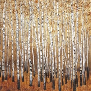 Sienna Birches I