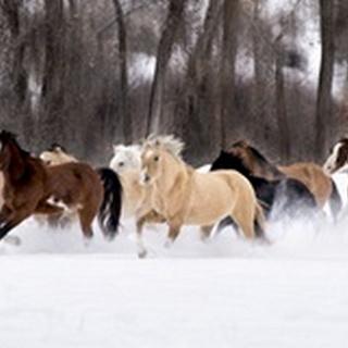 Snow Run II