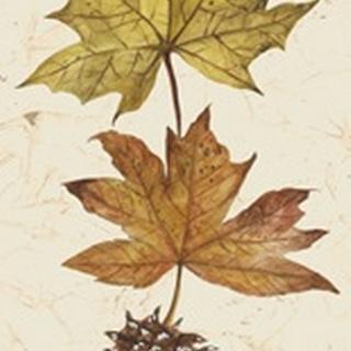 Autumn's Bounty Collection B