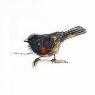 Songbird Study IV