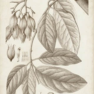 Sepia Exotic Plants VI