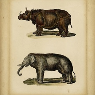 Studies in Natural History III