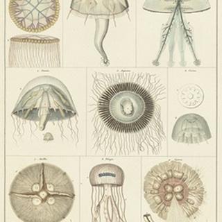 Jellyfish Display