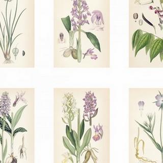 Purple Botanicals