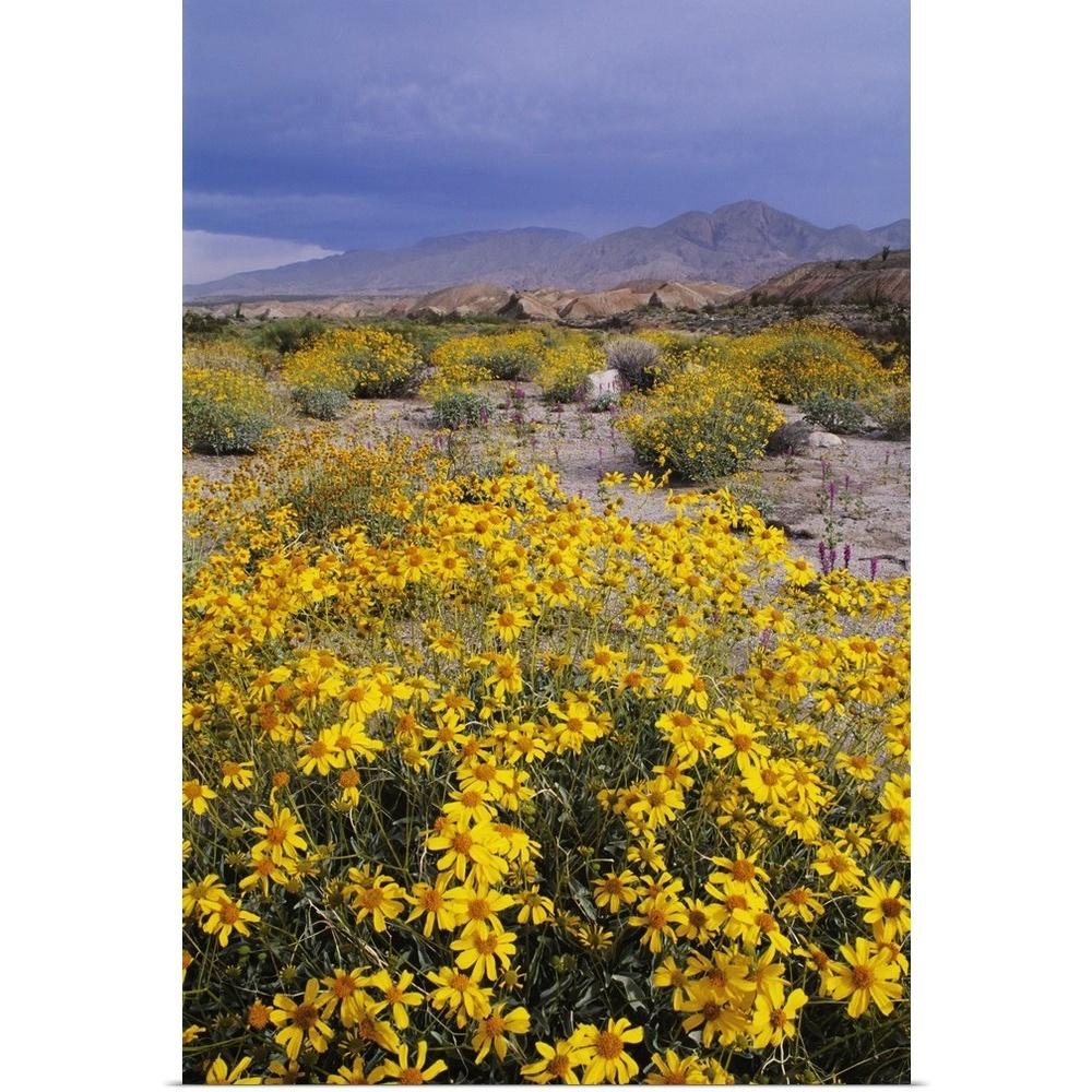Poster Print Wall Art entitled California, Anza-Borrego Desert State ...