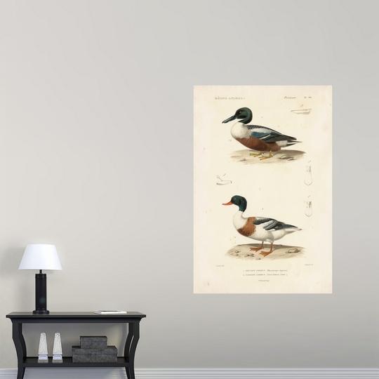 Poster Print Wall Art entitled Antique Duck Study II | eBay