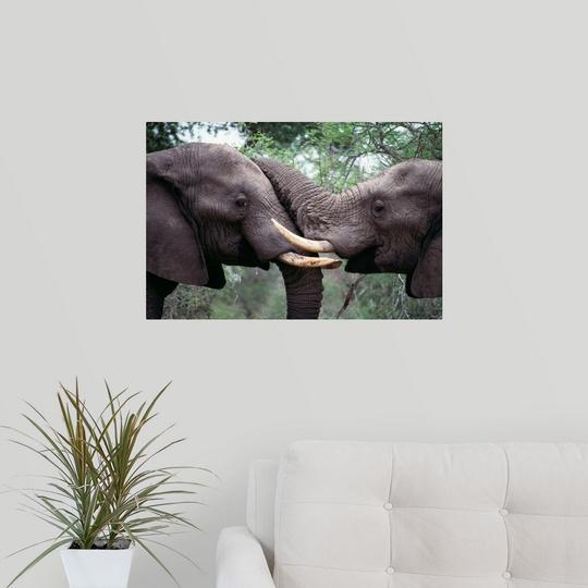 Wall-Decal-034-African-Elephant-Bulls-Fighting-034 miniatuur 12