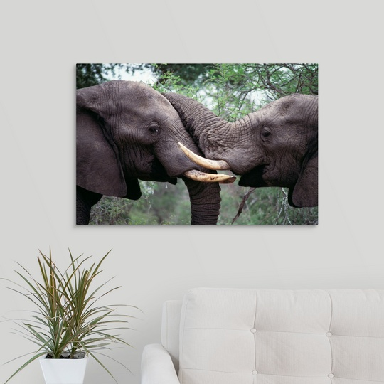 Canvas-Art-Print-034-African-Elephant-Bulls-Fighting-034 miniatuur 8