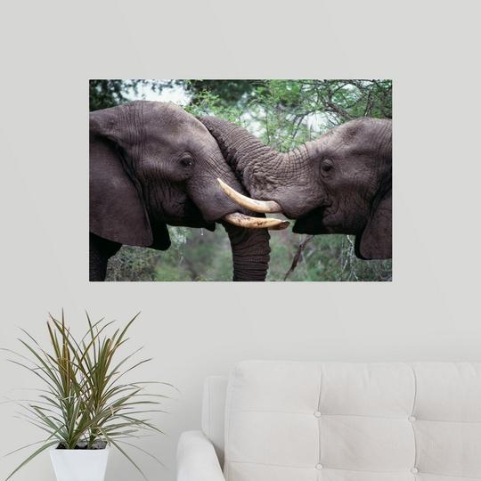 Wall-Decal-034-African-Elephant-Bulls-Fighting-034 miniatuur 13