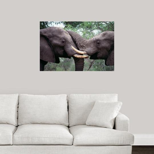 Wall-Decal-034-African-Elephant-Bulls-Fighting-034 miniatuur 14