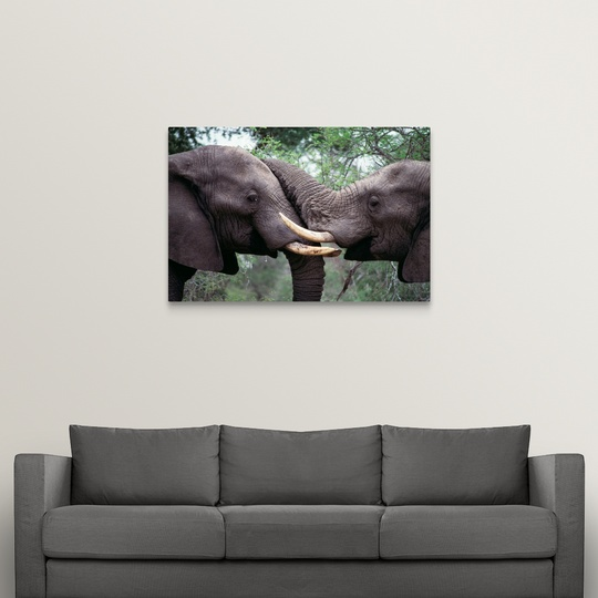 Canvas-Art-Print-034-African-Elephant-Bulls-Fighting-034 miniatuur 10