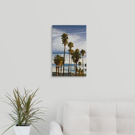 034-California-Southern-California-Santa-Barbara-Cabrillo-Boulevard-palms-m thumbnail 11
