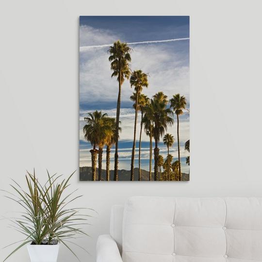 034-California-Southern-California-Santa-Barbara-Cabrillo-Boulevard-palms-m thumbnail 9