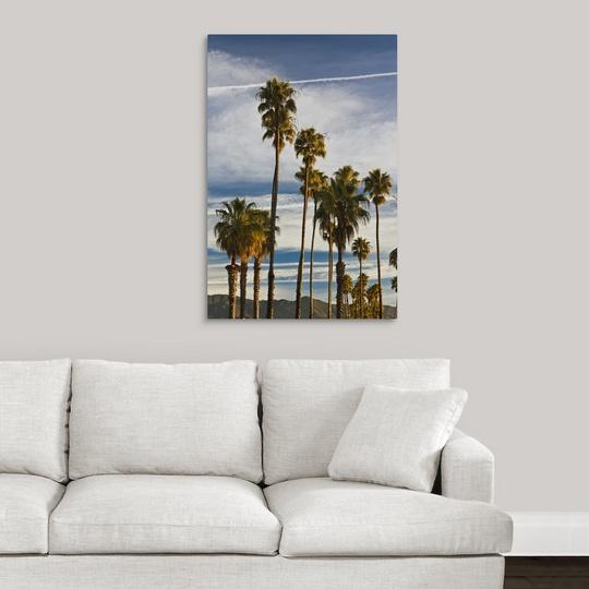034-California-Southern-California-Santa-Barbara-Cabrillo-Boulevard-palms-m thumbnail 7