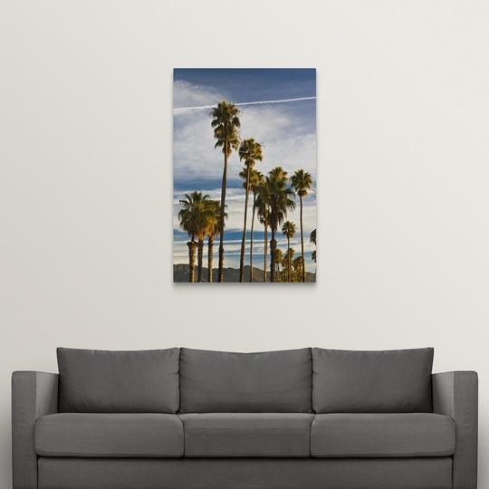 034-California-Southern-California-Santa-Barbara-Cabrillo-Boulevard-palms-m thumbnail 3