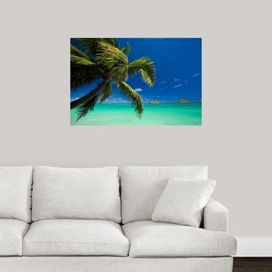 """Hawaii, Oahu, Lanikai, Palm Tree Over Turquoise Ocean, Na"